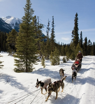 DogSled Photo Cred: Paul Zizka Travel Alberta